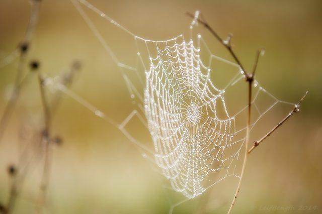 Spindelns nät...