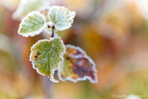 Frostmorgon...