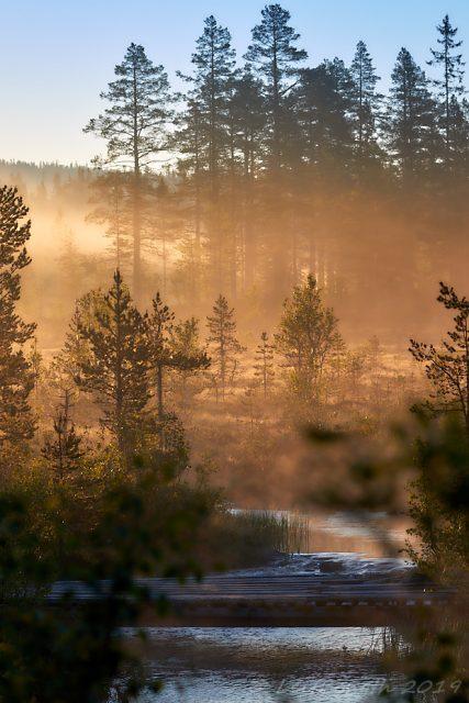 Morgonljus över bäcken...