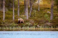 Björnen vid Andjusen…
