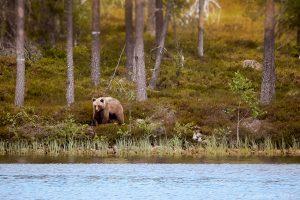 Björnen vid Andjusen...