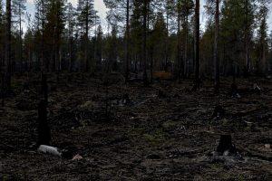 Efter skogsbrand...