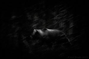 Björnen vid Bjönnsabjär