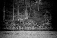 Björnen vid Andjusen