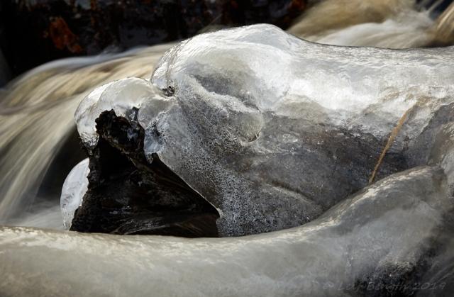 Issälen eller rovfågeln