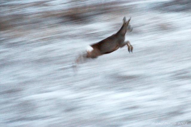 Flyende rådjur