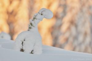 En härlig vinterdag