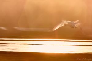 Flyger mot ljuset