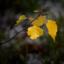 Blommor och blad i Rotendalen