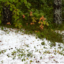 Höstens första vita...