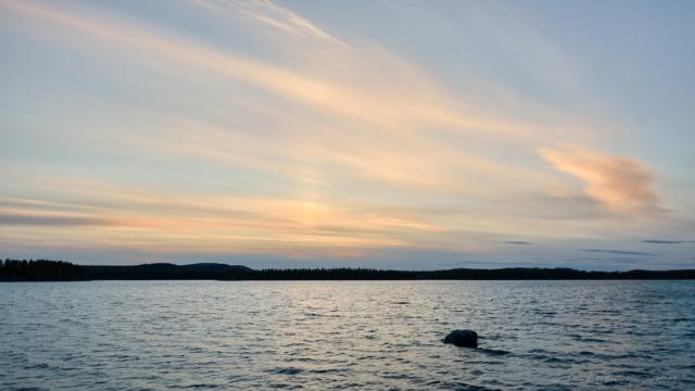Moskosel vid solnedgång