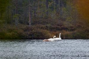 Fågelliv i Finland