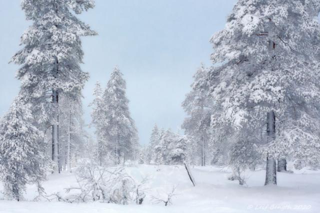 Vinterlandet norr på Kölen