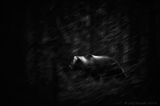 elobe_704376 - Nocturnal Spirit (svart/vitt)