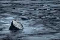 Vinterflod i Gysinge