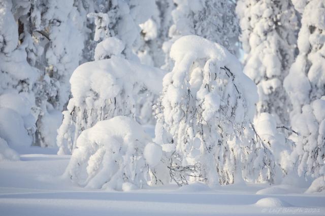 Vintervilande