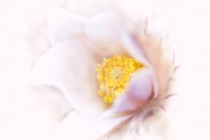 Vårblomman