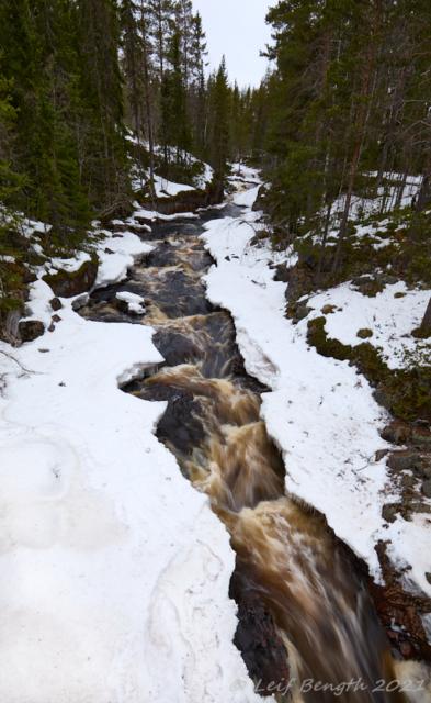 Olingan uppströms bron