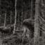 På älgskogen...