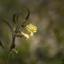 Några blommor vid Geddtjenn