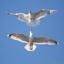 I Roslagens famn – Lördagsfåglar