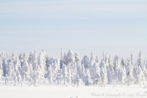 Gnistrande kyla och en härlig vinterdag...