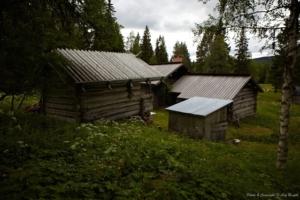 Midsommarfirande på skogens traditionella vis...
