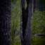 Bland skogens väsen
