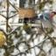 Dagens fågelbord... Sju arter
