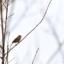 Vårfåglar i sikte...