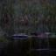 Svarthakarna och skogsrået