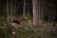 Sturuxan nest Syderblik