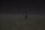Rådjur i mörkrets dimmor