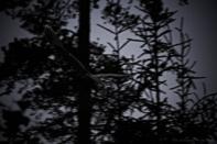 Ghosts/Väsen