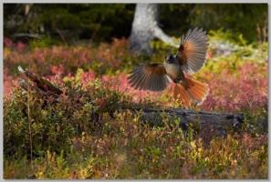 Gallerys - Wildlifephotographer.se