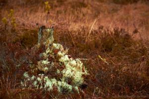 Skogens färger andra november...