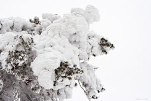 Snöabstinens...